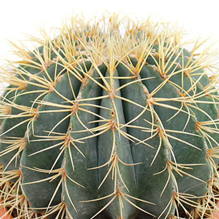 Ganz und zu Extrem Kaktus Pflege - 123zimmerpflanzen @YG_63