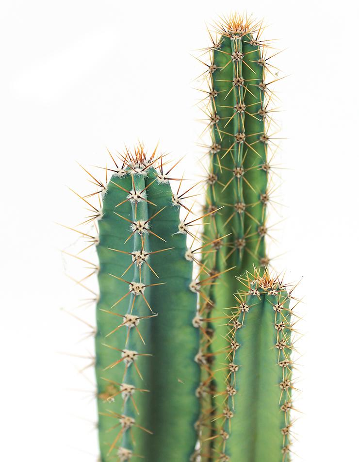 Kaktus Standort