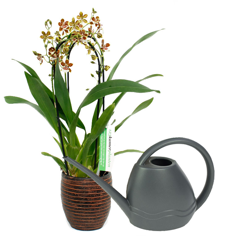 orchidee verliert alle blüten