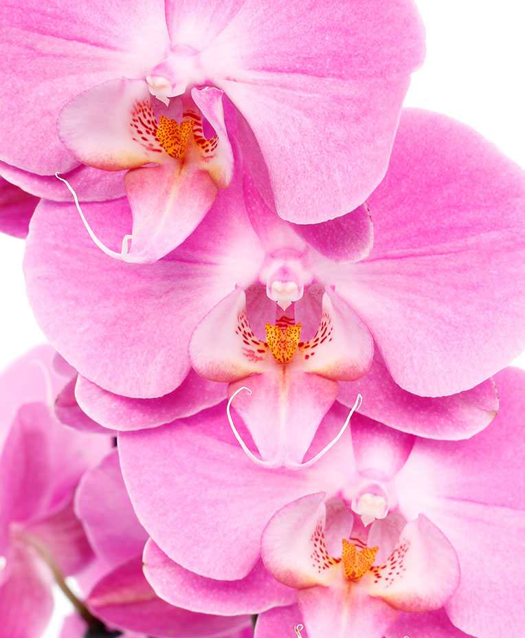 Orchidee Standort