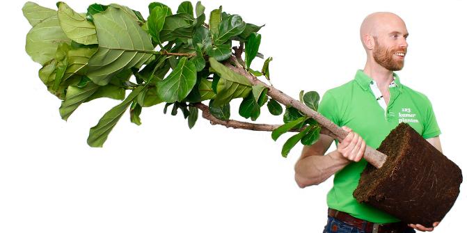 Zimmerpflanzen kaufen...